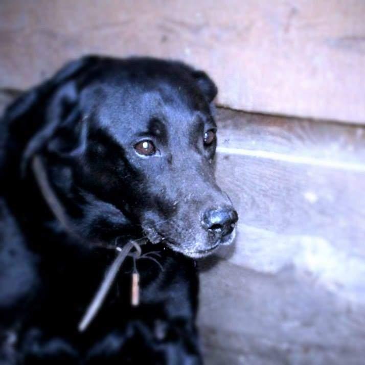 В столице пес не давал полиции забрать труп своей хозяйки