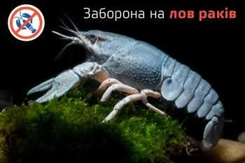В Украине запретили на два месяца вылов раков из-за линьки