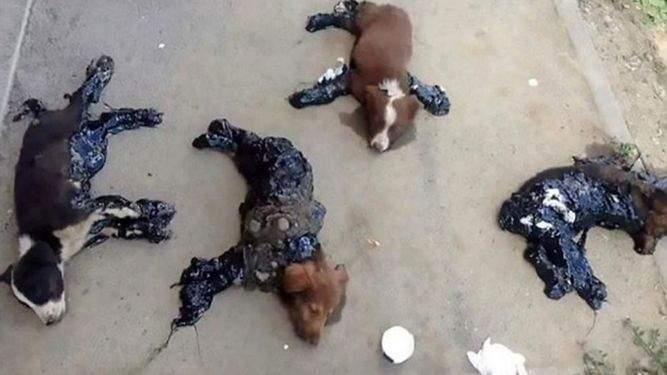 Как живодеры издеваются над собаками в Румынии