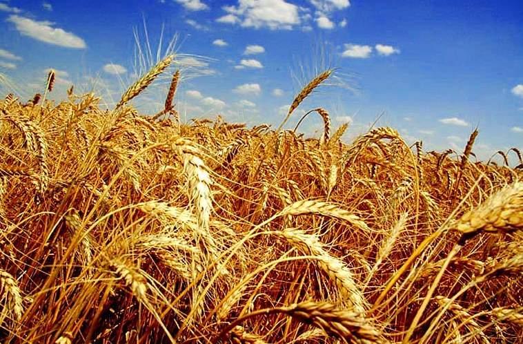 В Харьковской области разыскивают хозяев урожая