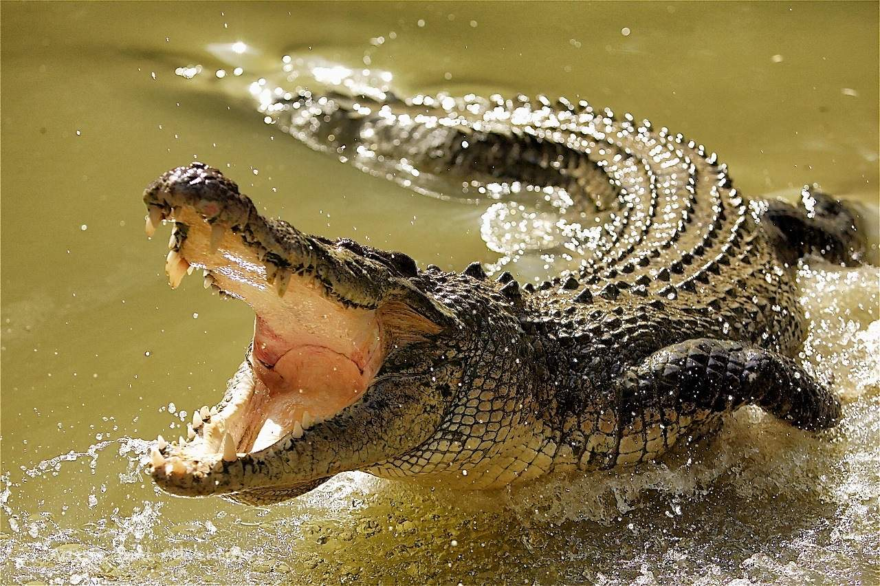 Из-за преследующего австралийца крокодила, турист пробыл на острове 3 дня