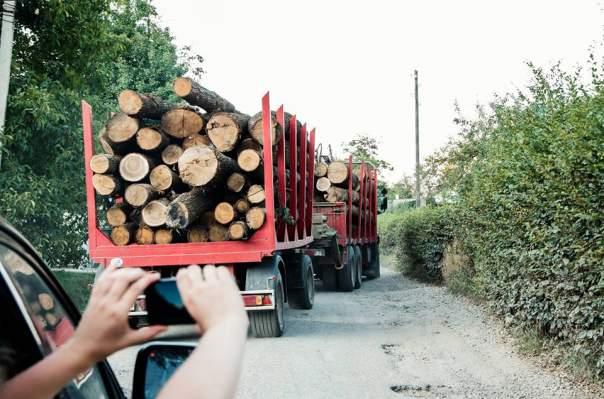 Руслану впечатлили масштабы вырубки леса в Карпатах