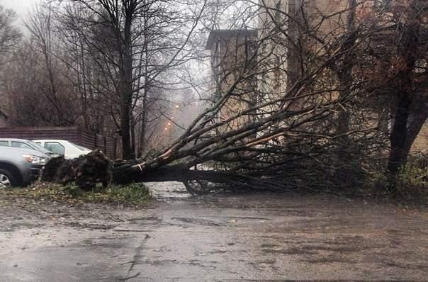 Из-за непогоды в Одессе повреждено около 50 электросетей