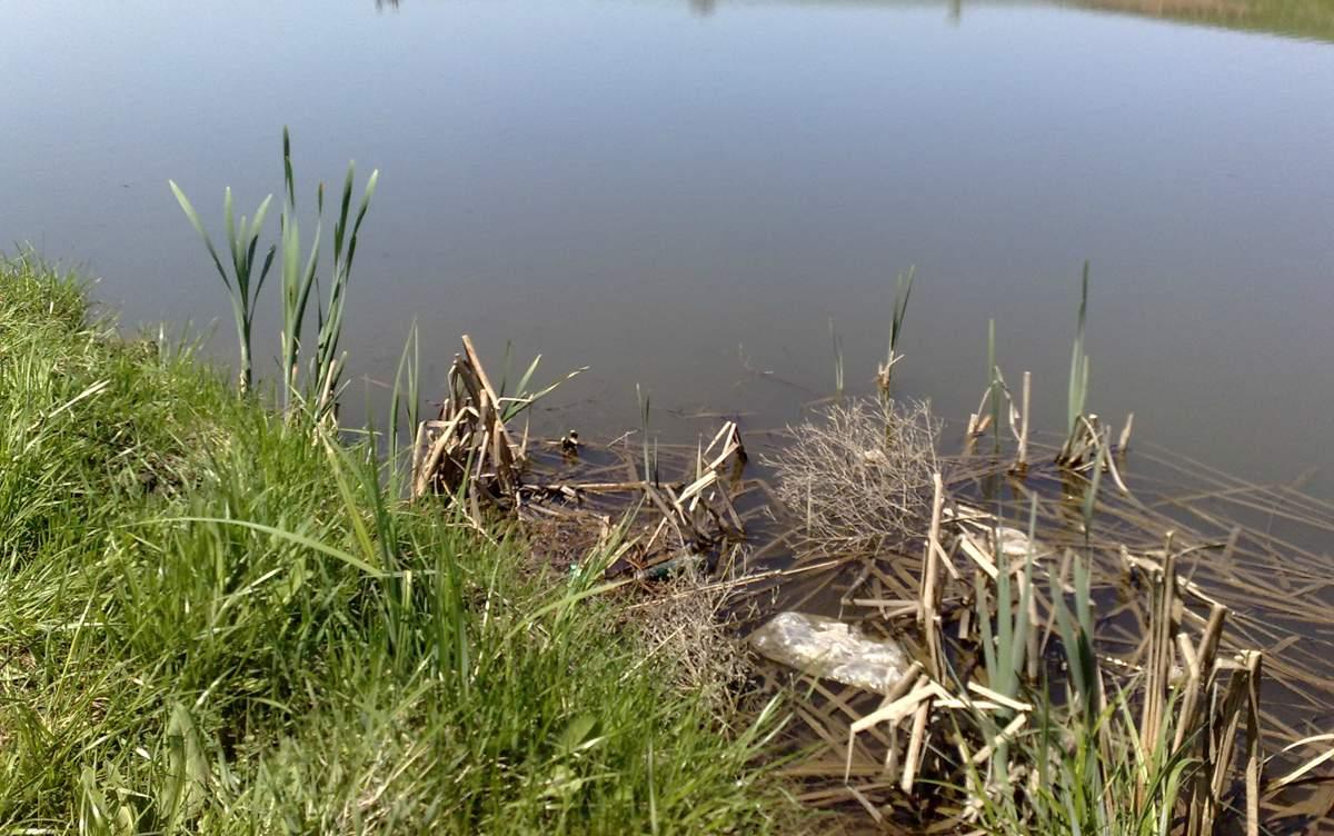 На Луганщине зафиксировали факт загрязнения водоемов