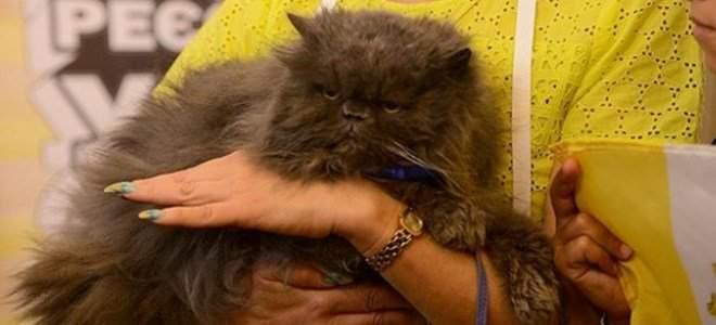 В Международный день кошек умер кот-рекордсмен