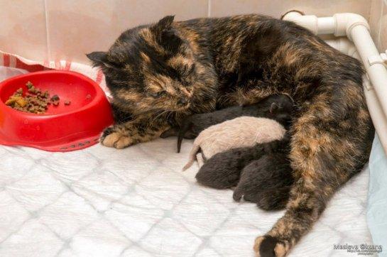 В Новосибирске беременная кошка пришла рожать в ветклинику