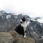 Кошка спасла туриста, который заблудился в горах