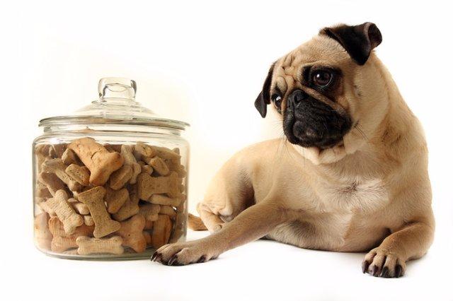 Основные аспекты выбора корма для собак