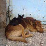 В Туле дворовая собака стала другом для маленького котенка