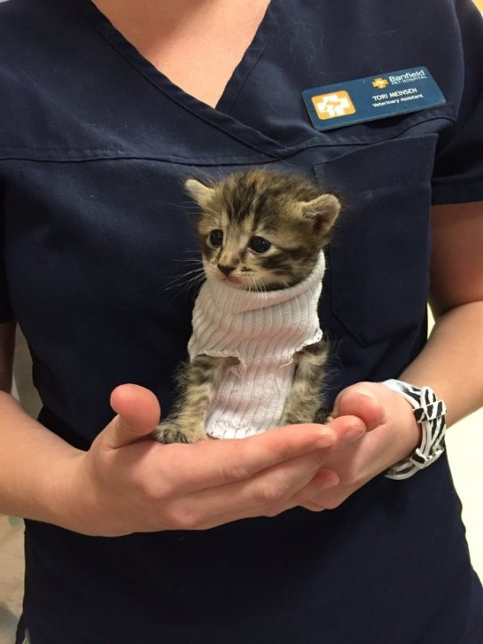 Котенок в свитере из носка прославился на весь интернет