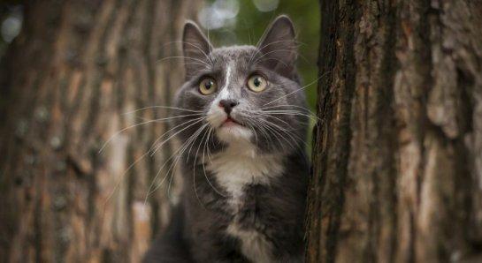 В Перми кот устроился на работу в строительную компанию