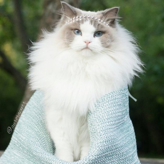Кошка по кличке Принцесса Аврора стала звездой Инстаграма