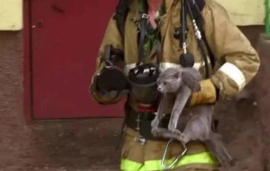 В Шымкенте пожарный спас кошку с котятами