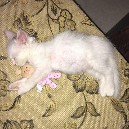 Спасение котенка из корейского магазина
