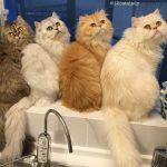 История про жительницу Японии, которая держит в квартире 12 кошек