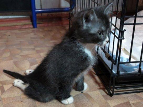 История про котенка по кличке Мультик