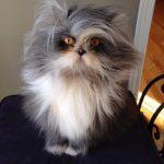 Невероятно лохматый кот покорил интернет
