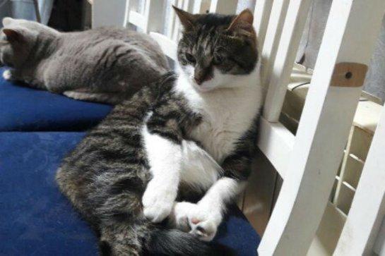 Кот из Эрмитажа грел щенка