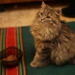 Новая жизнь кота, который примерз ко льду