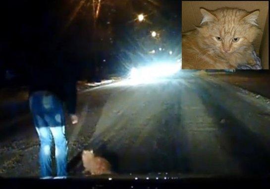В Таганроге водитель спас кота, которого сбила машина