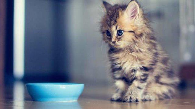 Корма для кошек премиум-класса с витаминами и минералами