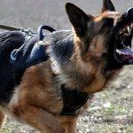 Украинские пограничники натравили собак на представителей ОБСЕ