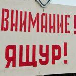 В Башкирии ящур. Объявлен режим ЧС
