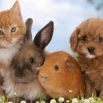 Депутаты хотят ввести в России платную регистрацию домашних животных