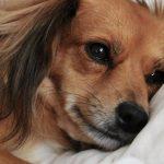 В Италии женщина добилась отпуска по уходу за собакой