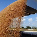 В России уже не рады рекордному урожаю зерна