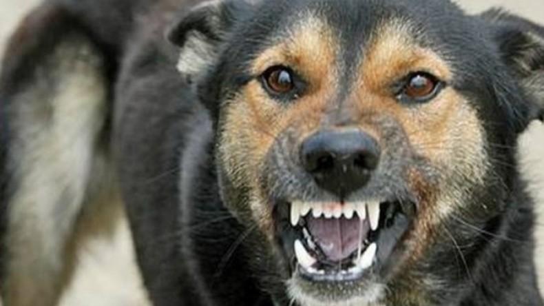 Бешеная собака искусала 17 человек
