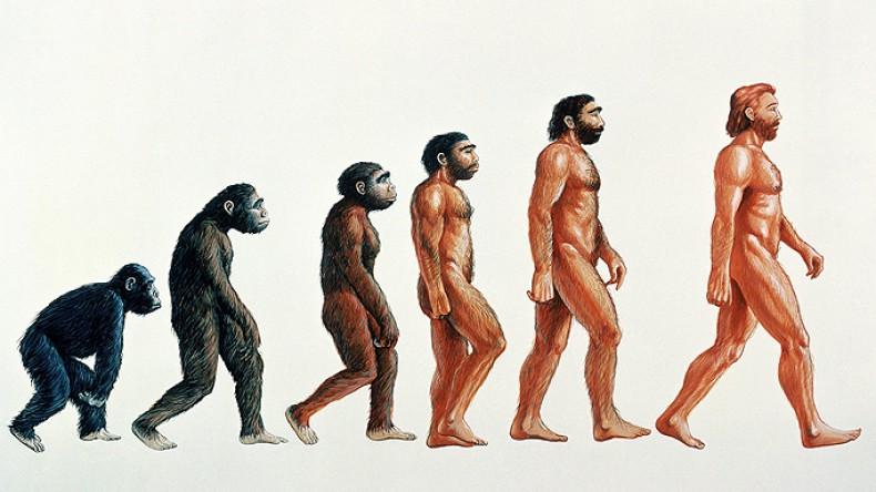 Форма человеческого мозга эволюционировала с течением времени