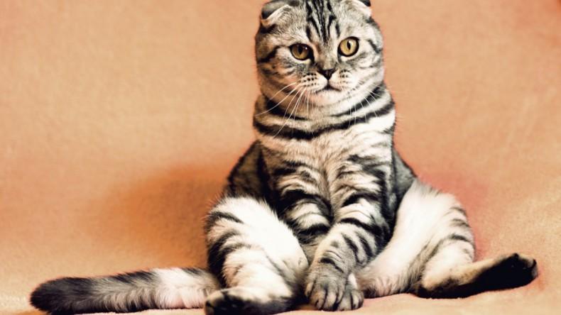 «Ингосстрах» застрахует домашних животных
