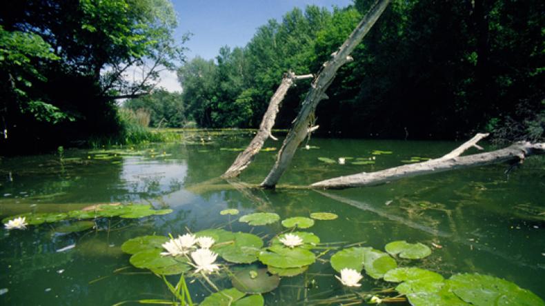 В России отметили день водно-болотных угодий