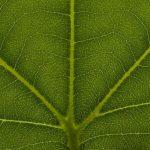 Фотосинтез появился на миллиард лет раньше, чем считалось ранее
