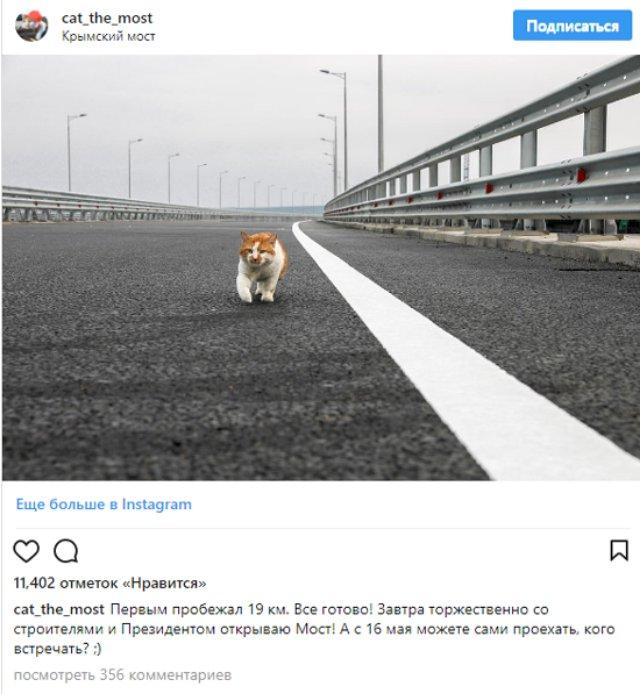 Главной звездой Крымского моста стал кот