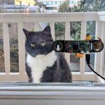 Инженер разработал систему дистанционного открывания двери для кота