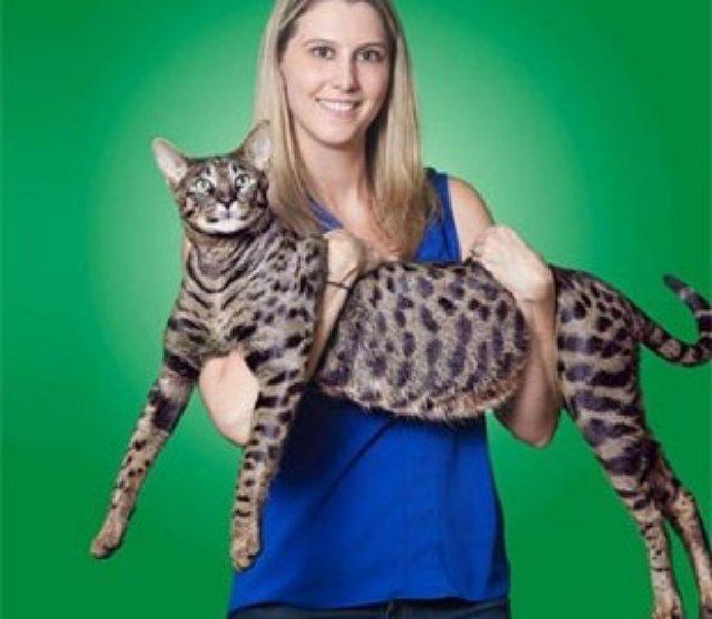 Американская семья заплатит 13 биткоинов за четырех сбежавших котов