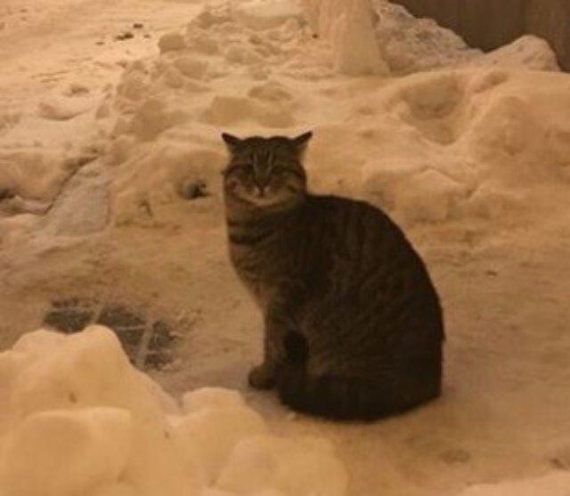 У кота Амбассадора из МИД Украины появился свой аккаунт в Twitter