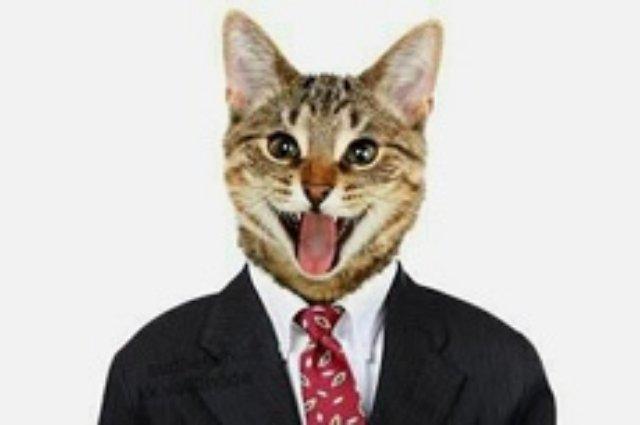 Facebook заблокировал аккаунт блогера за фото кота в деловом костюме