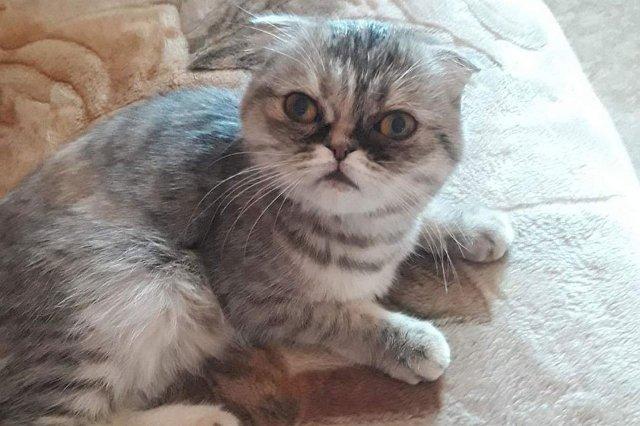 Барнаульцы спасли замурованную под крыльцом кошку
