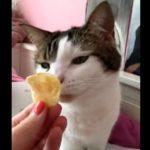 Кошка понюхала чипс и сильно пожалела