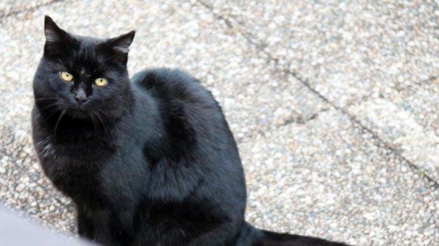 Слепая кошка Изабелла ушла на пенсию и ищет новых хозяев
