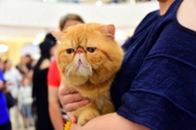 Создан сайт с непрерывным мурчанием кота