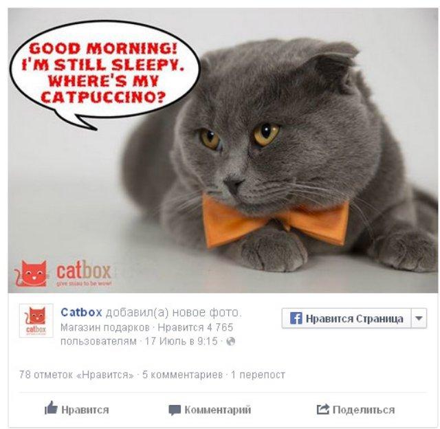 Кота по кличке Босс назначили пиар-менеджером румынского интернет-магазина
