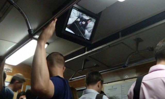 В киевском метро опять взломали мониторы и разместили изображения котов