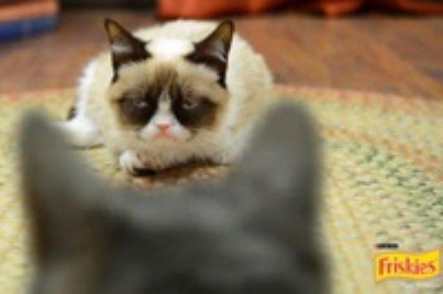 Самый Сердитый кот в Интернете снялся в рекламе кошачьего корма