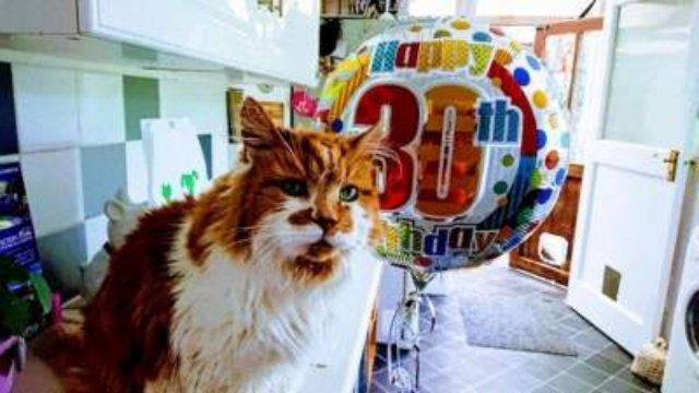 Так выглядит самая старая кошка на планете