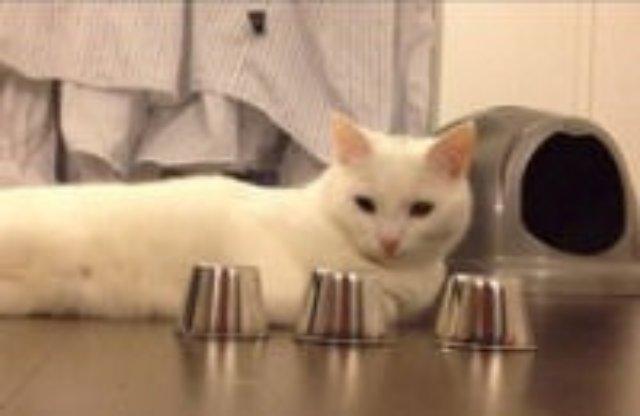 «Кот-наперсточник» покорил Интернет
