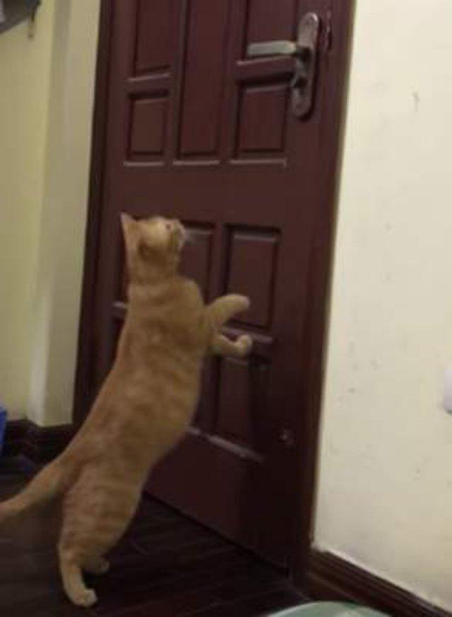 Настойчивая кошка доказала, что двери ей не преграда